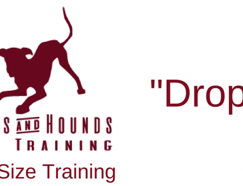 Drop! – Bite size Puppy and Dog Training video