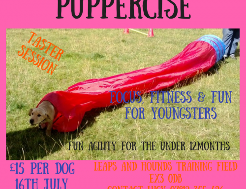 Puppercise Workshop